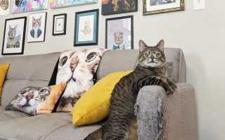 Кошку с лишней хромосомой хотели усыпить, но она стала звездой