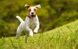 Как поймать собаку если она не подходит: лучшие способы