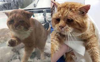 Девушка подружилась с котом, прожившим годы на улицах, и забрала его, несмотря на все препятствия