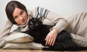 Почему одинокие женщины заводят кошек: интересное мнение