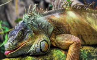 Биологи обнаружили фазу быстрого сна у аквариумных рыб данио рерио
