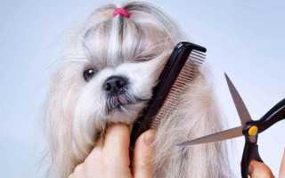 Как стричь собаку в домашних условиях – как часто и чем, какие породы нуждаются в процедуре