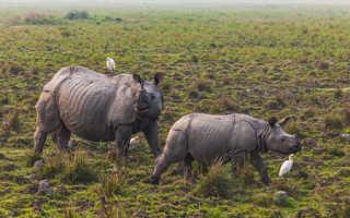Биологи европейского НИИ восстановят популяцию вымершего вида носорогов