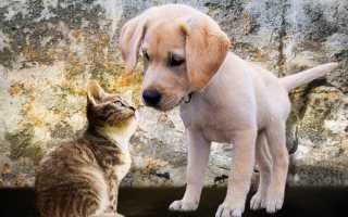 Как поставить уши щенку: когда они встают сами и почему могут упасть