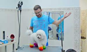 Креативное окрашивание пуделя — фото разноцветных собак